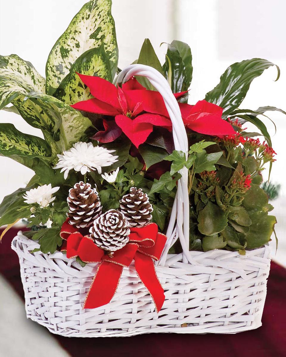 Christmas Poinsettia Basket-Standard