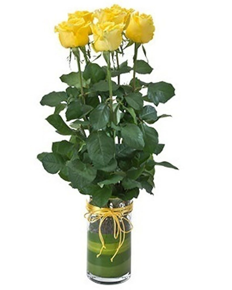 Rosebuds-Yellow