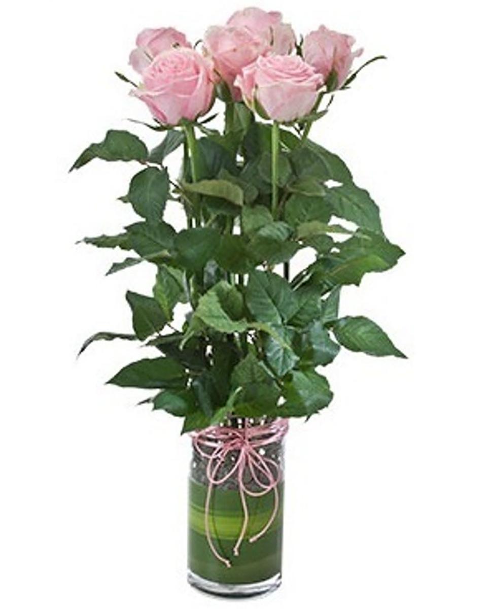 Rosebuds-Pink
