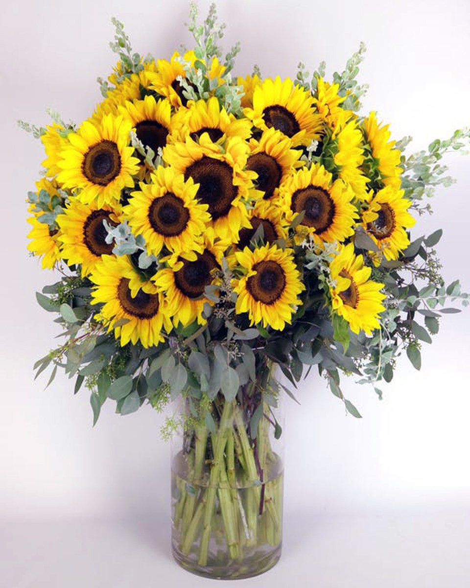 50 Sunflowers  arranged in a vase