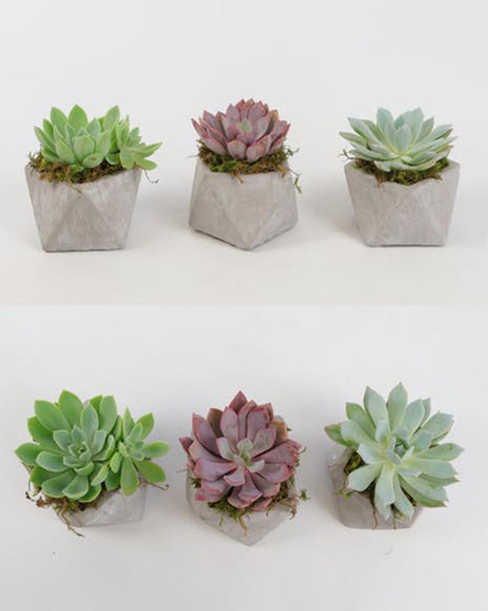 Deluxe-5 Plants