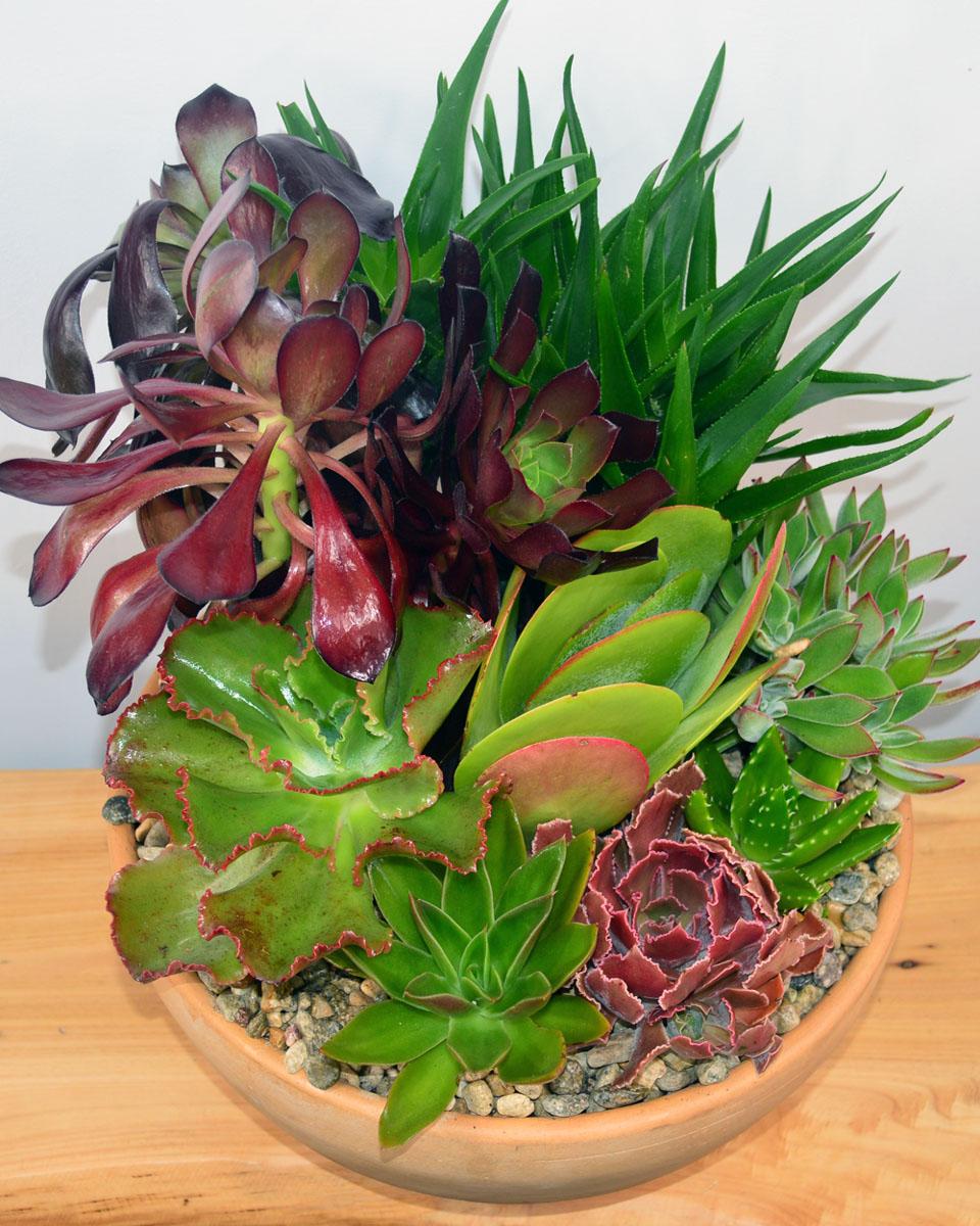 12 In Succulent Garden