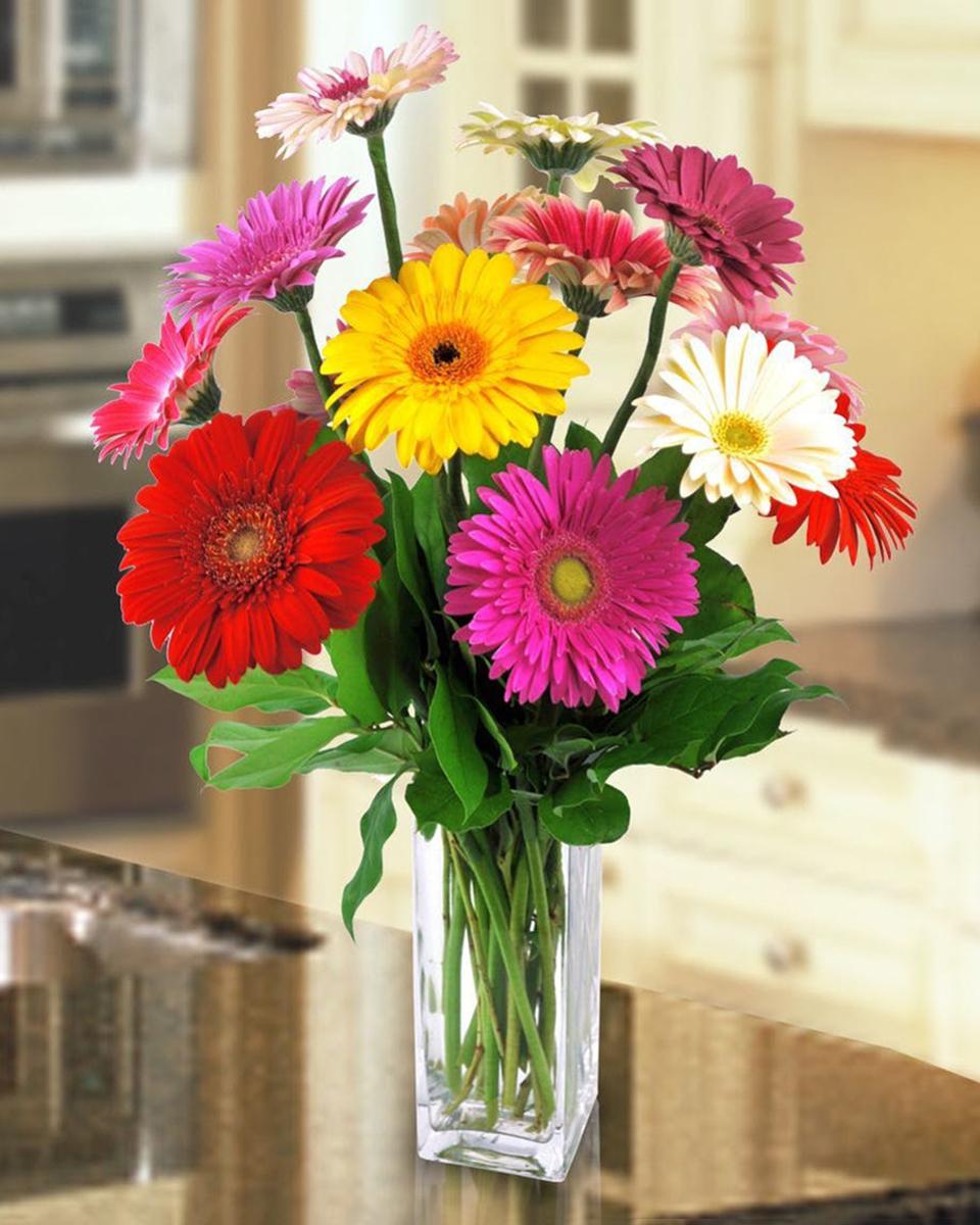 Standard (12 Gerberas in Vase)