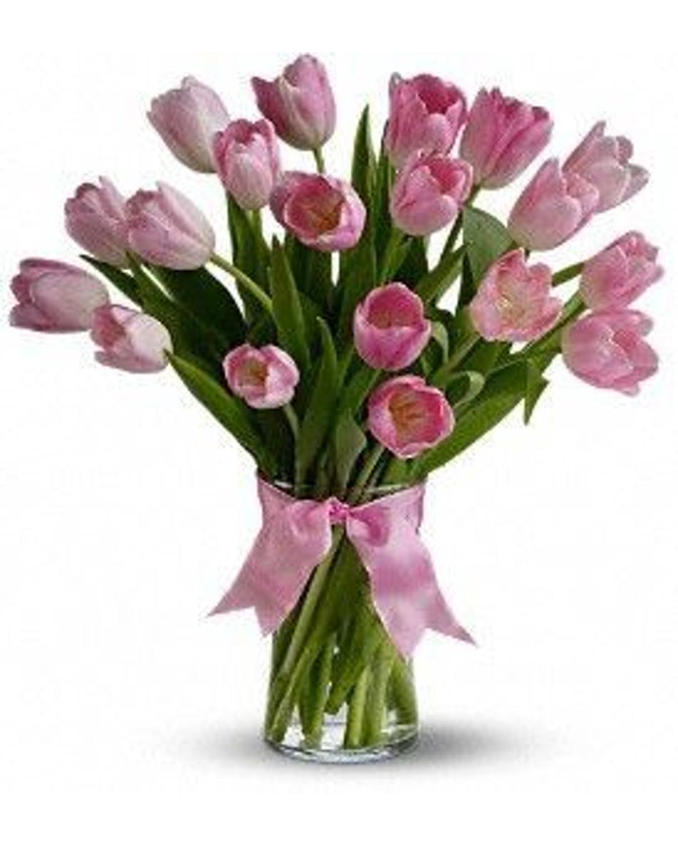 Standard-20 Tulips