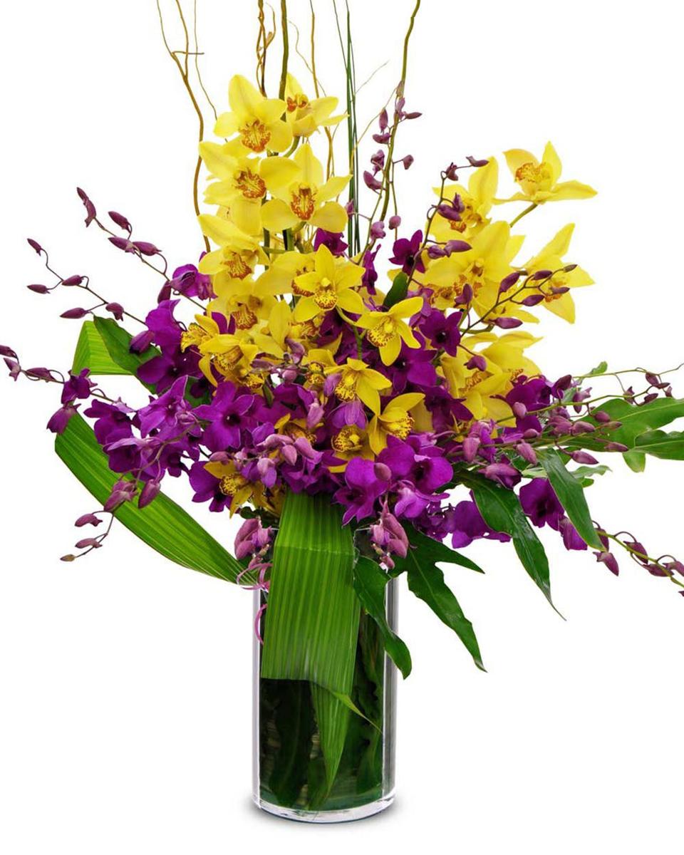 Orchids Forever-Standard