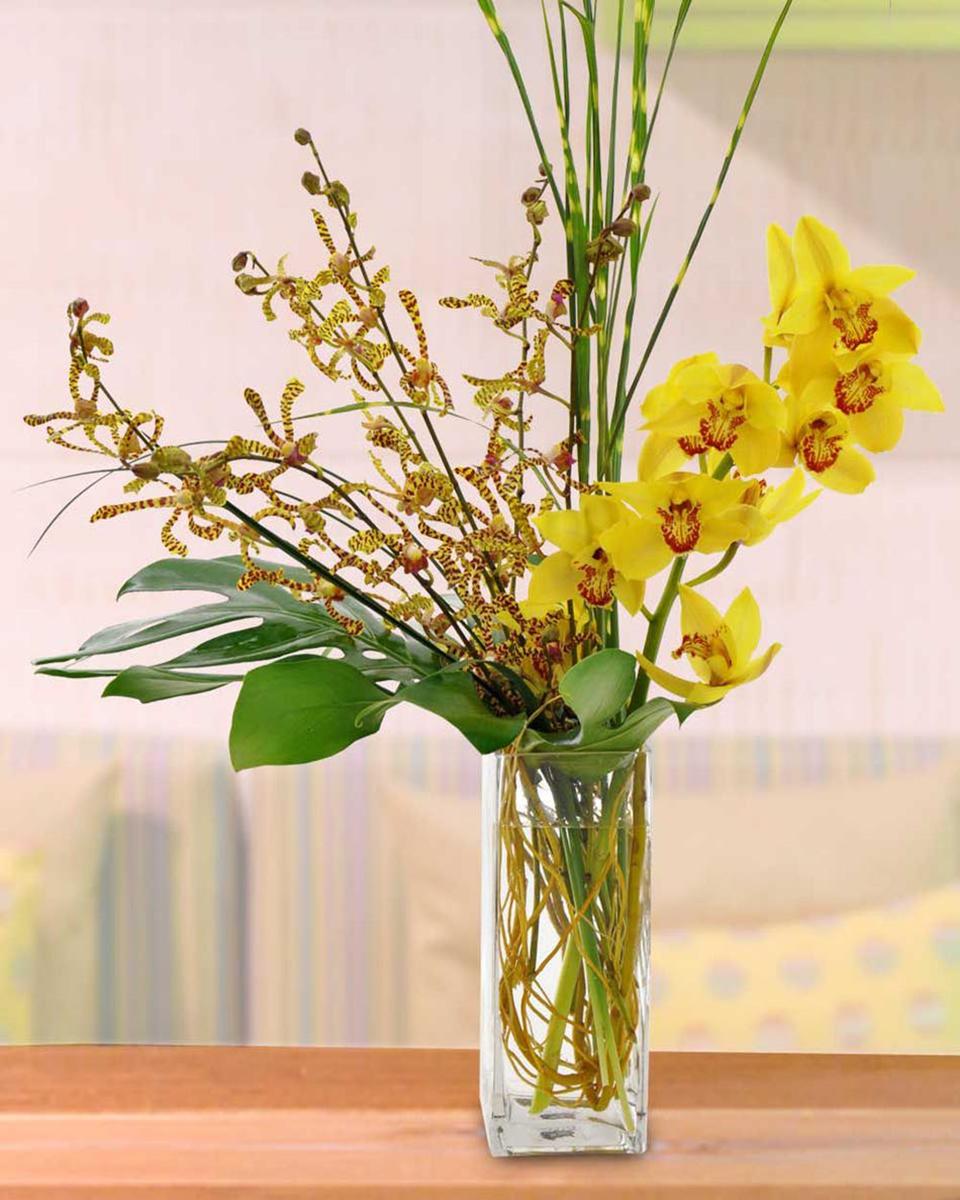 Orchid Sunset-Standard