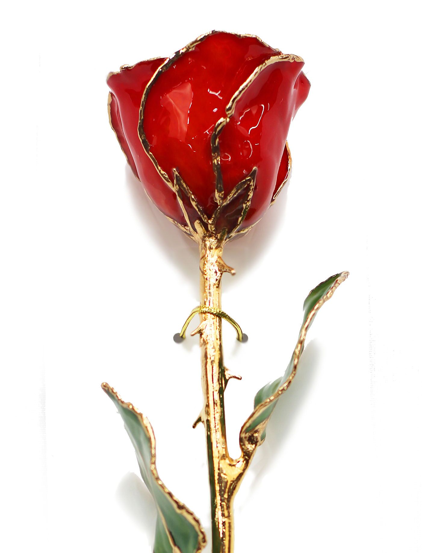 Red Rose dipped in Gold