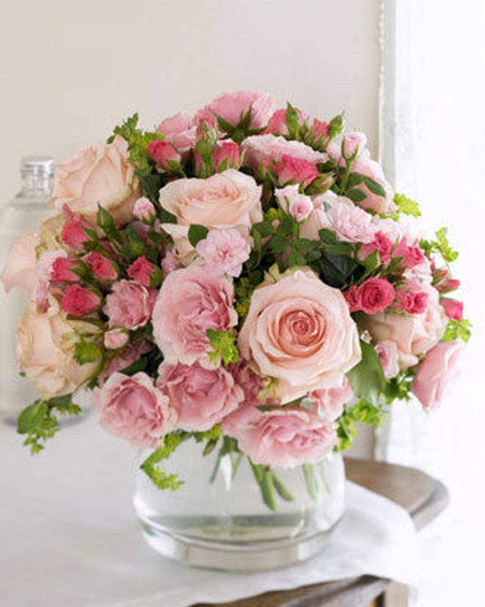 Rose Blush-Standard