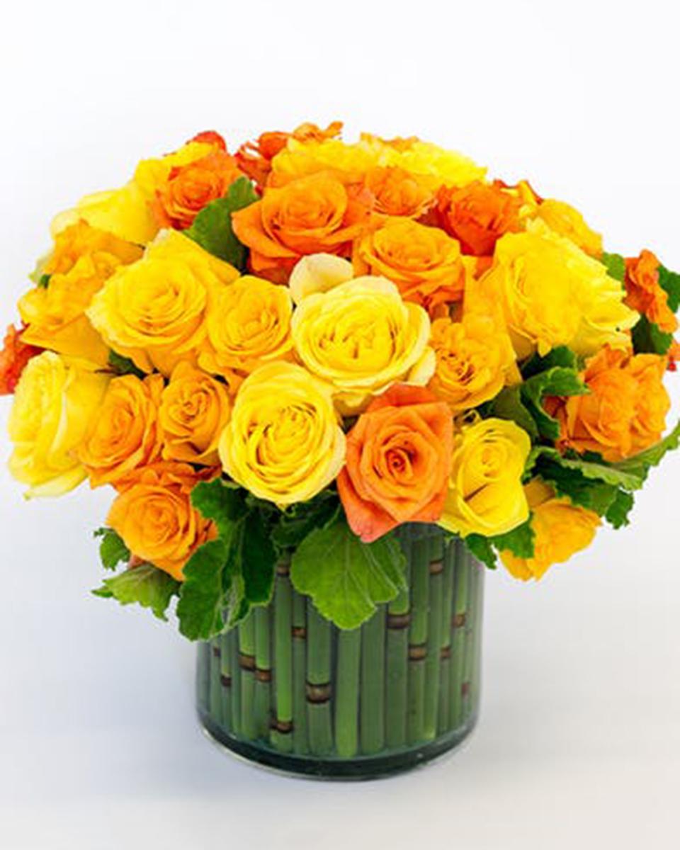 Standard-36 Roses