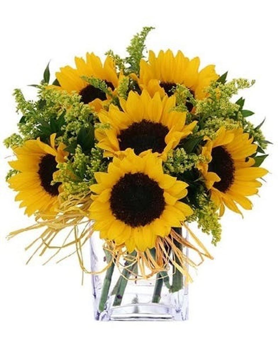 Standard 6 Fresh Sunflowers