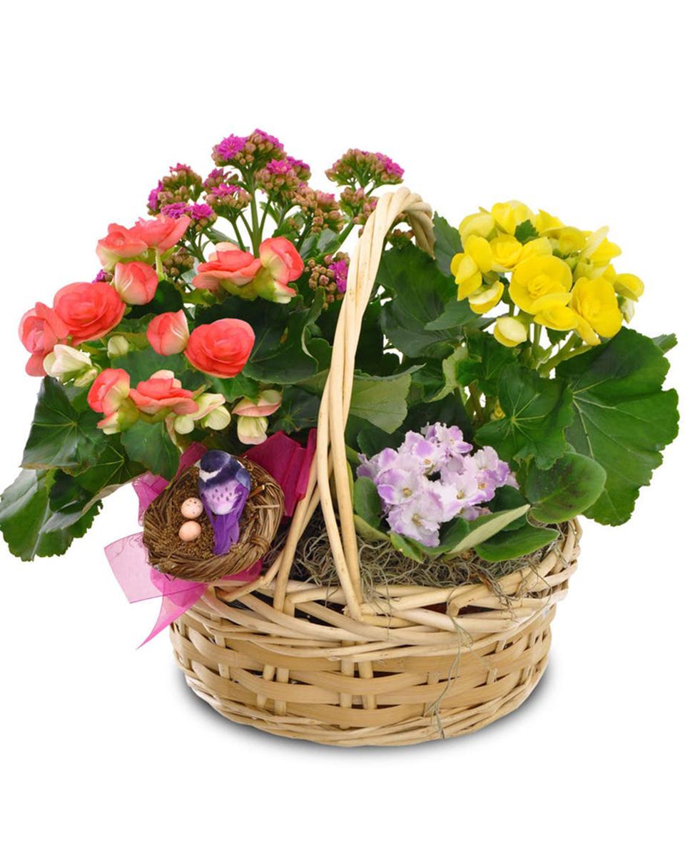 Blooming Basket Garden-Standard