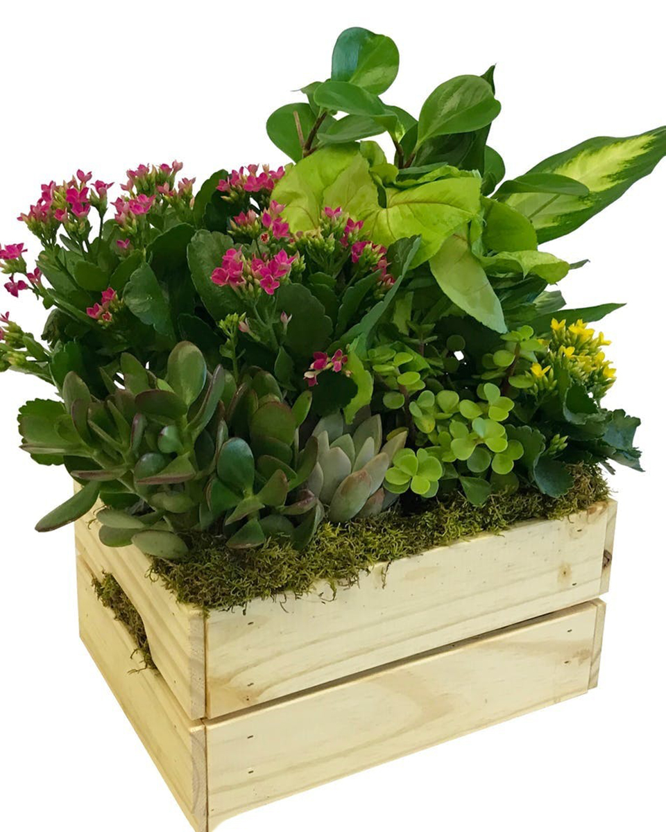 Blooming Crate-Standard