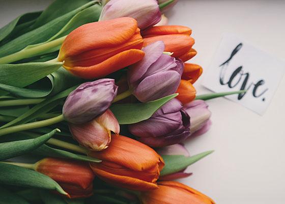Valentines Tulips