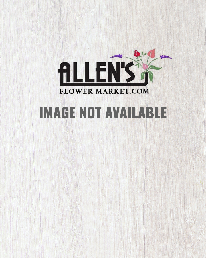 Orchids and Berries-Deluxe