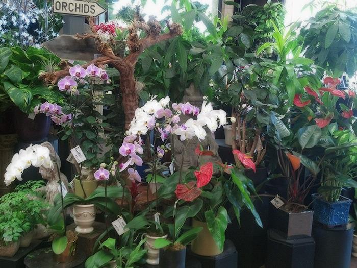 Preferred Florist Store