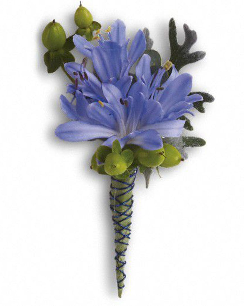 Agapanthus Bout-Standard