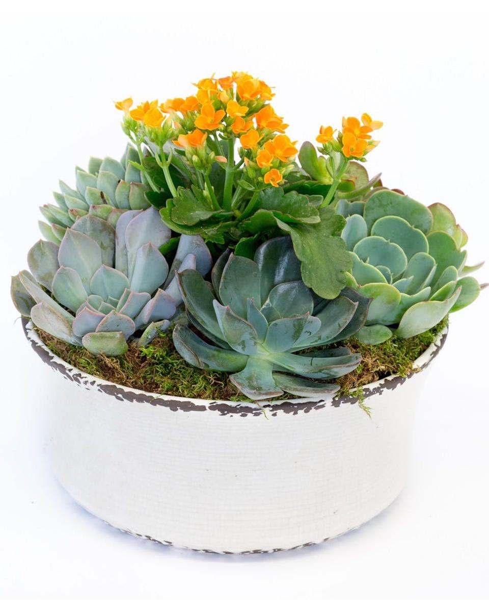 Stunning Succulents-Standard