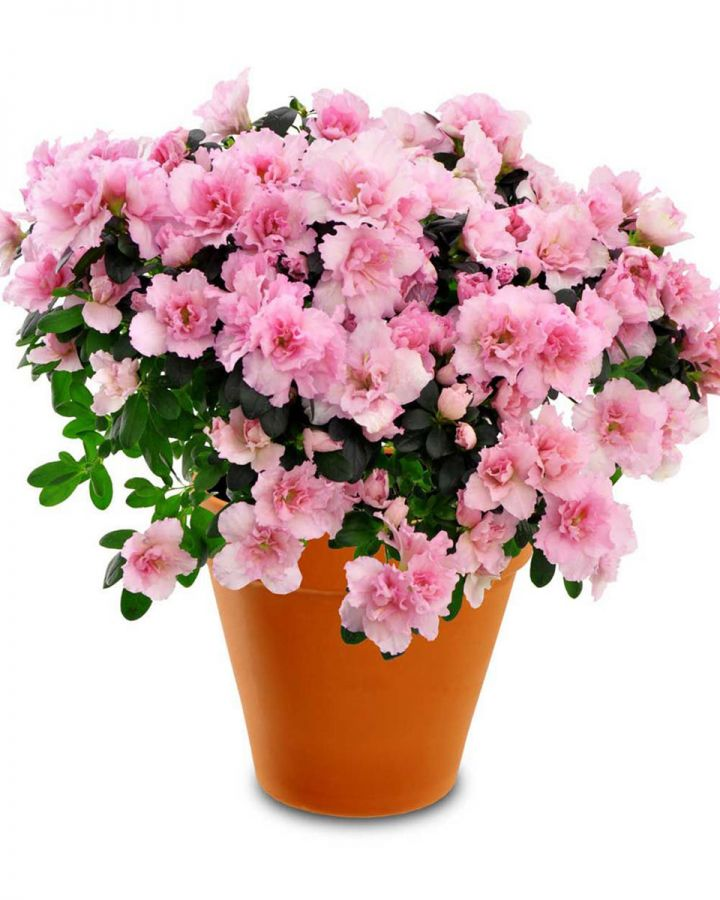 Caring For Flowers & Plants in Warmer Weather