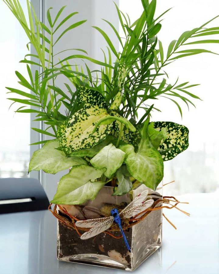 Why Spring is a Great Time for Houseplants