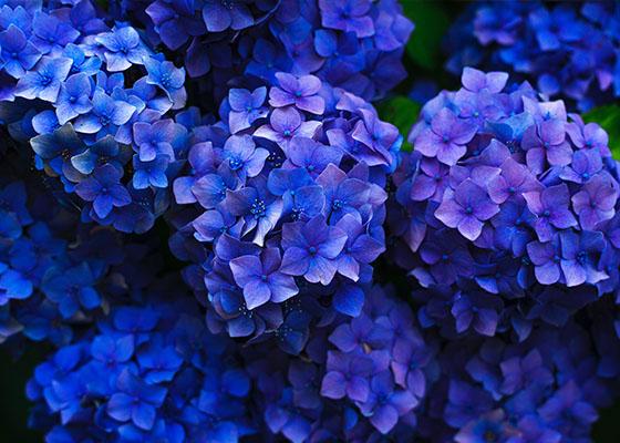 Send Grandma and Grandpa a Special Bouquet on Grandparents Day