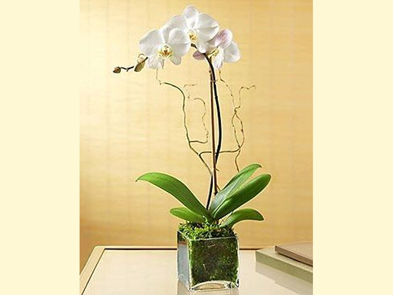 Celebrate Houseplant Appreciation Day with Orchids
